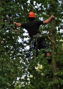hertfordshire-tree-company-10-214x300