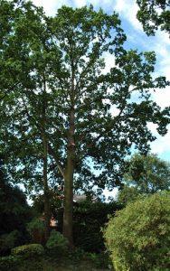 hertfordshire-tree-company-19-188x300