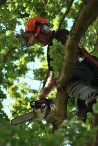 hertfordshire-tree-company-26-201x300